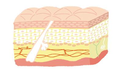 肌図1.jpg